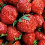 Frische Erdbeeren – gesundes Naschen für Läufer