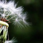 Laufend durch die Allergiesaison